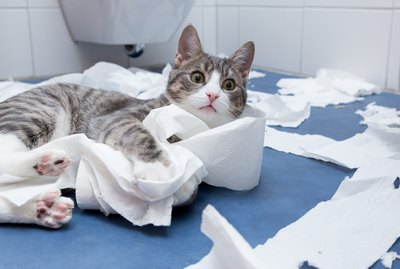 Why Do Cats Shred Toilet Paper?