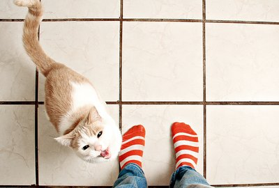 Why Are Cats Always Underfoot?