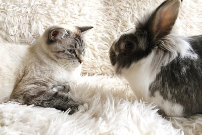 Rabbits or Cats: Which is Best For a Small Apartment?