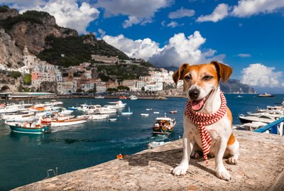 Ciao, Bella! 220 Perfect Italian Names For Dogs
