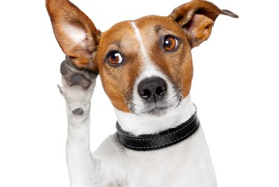 Your Dog Can Understand What You Say, But Only If You Do This