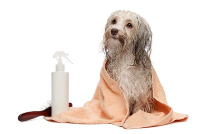 Homemade Oatmeal Shampoo for Dogs