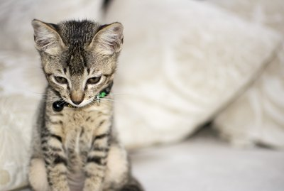 Can Cats Have Separation Anxiety?