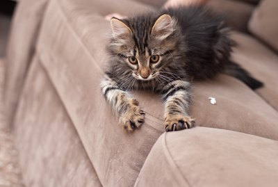 Why Do Cats Use Their Claws When They Knead?