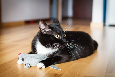 3 Catnip Alternatives To Get Your Kitty Stoned