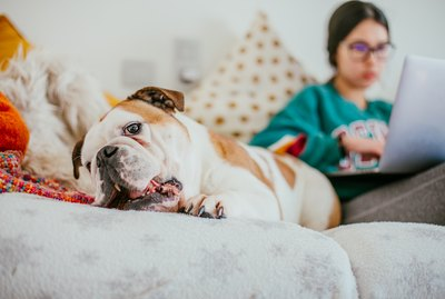 6 Crucial Tips For Working From Home When You Have a Dog