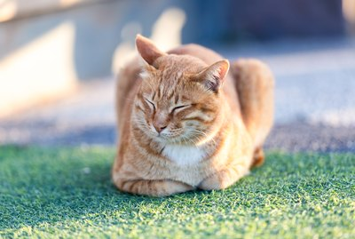 Do Cats Fart? These Signs & Symptoms Mean Your Flatulent Feline May Need A New Diet