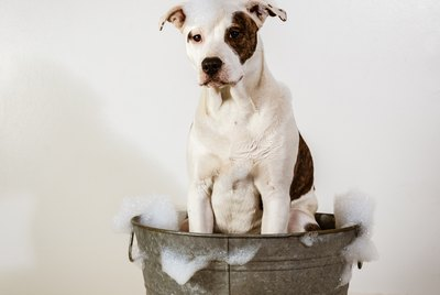 Is Dr. Bronner's Safe For Dogs?