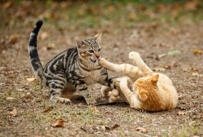 What To Do If You Witness a Cat Fight
