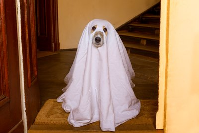 Could You Be Haunted By The Ghost Of A Dead Pet?