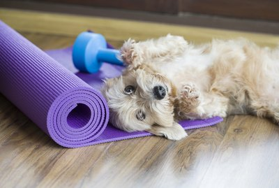 Why Do My Pets Always Bug Me When I'm Working Out?