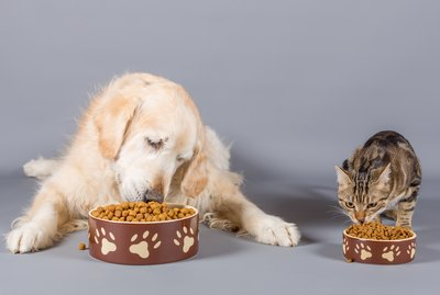 What's The Difference Between Dog Food And Cat Food?