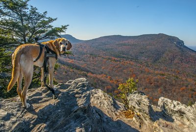 Tips for Hiking With a Dog