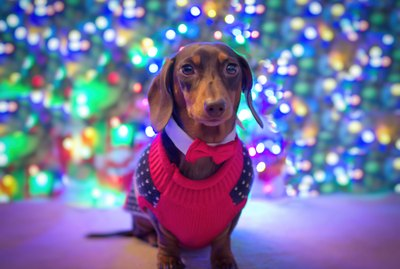 Just 21 Adorable Dogs Wearing Christmas Sweaters