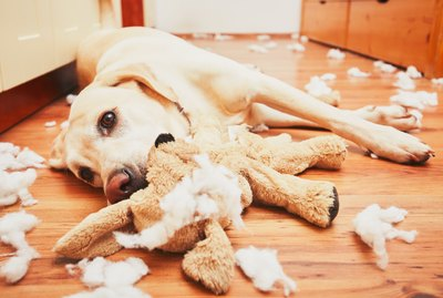 Here's What To Do When Your Dog Chews Everything You Own