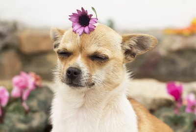 Can Dogs Have Seasonal Allergies?