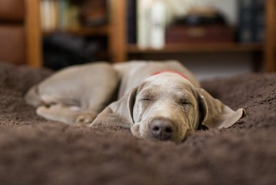 Is Melatonin Safe For Dogs?
