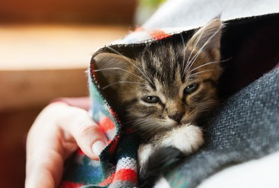 How to Know When a Kitten Needs to Pee