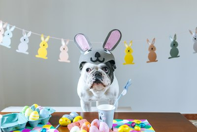 Easter Leftovers You Can Give Your Pet (And Those You Can't)