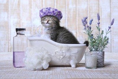 How To Bathe A Kitten