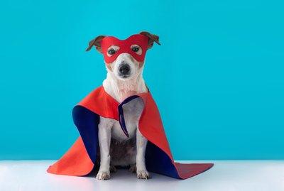 186 Superhero Names For Dogs