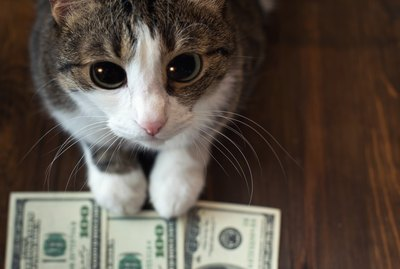How Much Do Americans Spend on Their Pets?