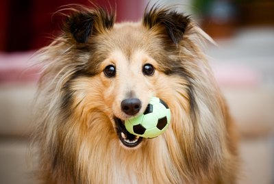 How To Pick The Best Dog Toys