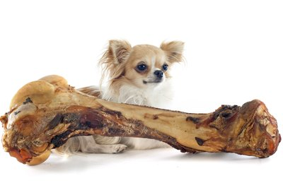 Can Dogs Eat Turkey Bones?