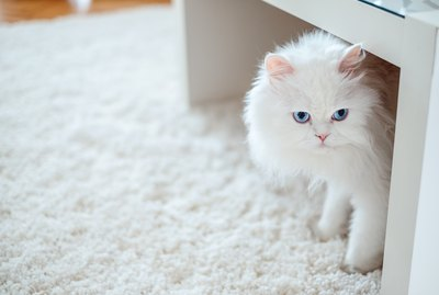 How to Stop a Cat From Pooping on the Carpet