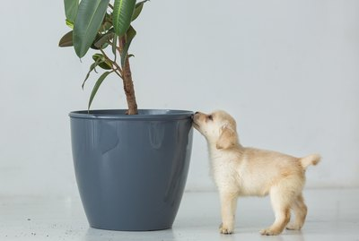 Why Does My Dog Pee on Houseplants?
