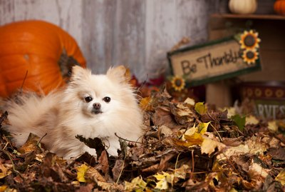 5 Thanksgiving Treats To Make For Your Dog