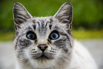 100 Blue-Eyed Cat Names