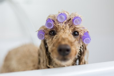 Spa Treatments For Dogs: Which Ones Actually Work?