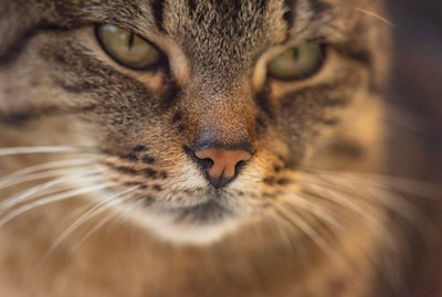 11 Fascinating Facts About Your Cat's Whiskers
