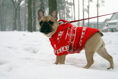 When Do Dogs Need to Wear Coats?