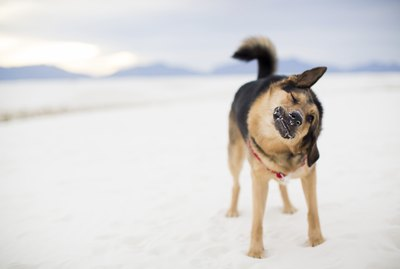 Why Does My Dog Do That? 20 Bizarre Dog Behaviors Explained