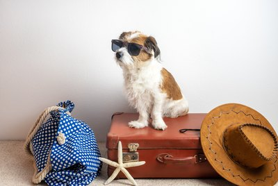 Tips for Finding a Dog-Friendly Hotel
