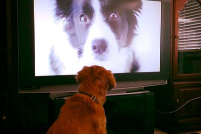 Is Screen Time Bad For Dogs?