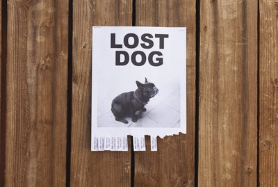 Make Sure You Take These Preventative Steps In Case Your Pet Gets Lost
