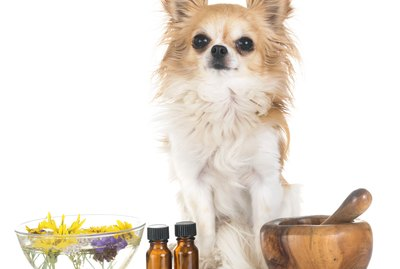 Can I Use Argan Oil on My Dog?