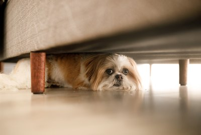 Signs Your Dog is Stressed (And What to Do About It)