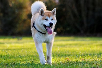 326 Unique and Awesome Japanese Dog Names