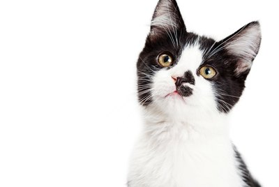 Symptoms and Treatment of Ear Infections in Cats