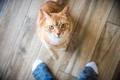 The Cuteness Guide to Cat Sitting for Beginners