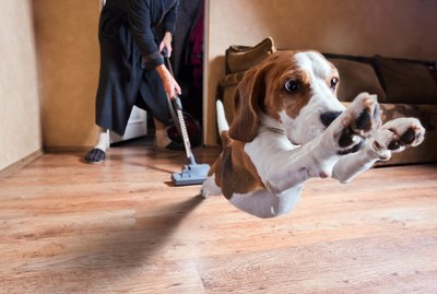 Why Are Dogs and Cats Scared of Vacuum Cleaners?