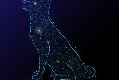 107 Astrological Names For Dogs