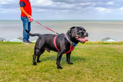 Are Retractable Leashes Safe For Your Dog?
