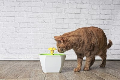 Should I Get My Cat a Water Fountain?