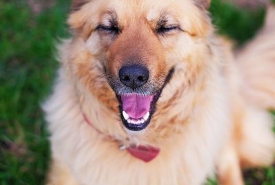 Here's What Dogs Think Is Funny