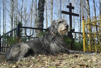 Is It OK To Walk My Dog In A Cemetery?